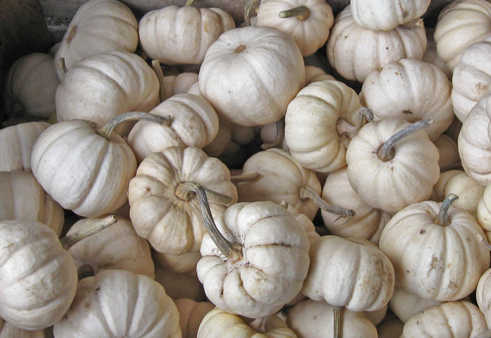 White_pumpkins