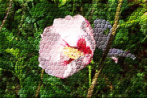 hibiscus_090104