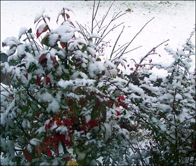 october_snow_03.jpg