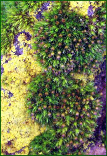 tree_moss.jpg