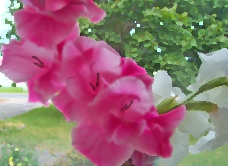 Pink_glad