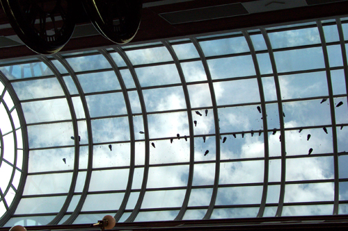 Birds_skylight